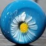 White Fringe Flower Murrini